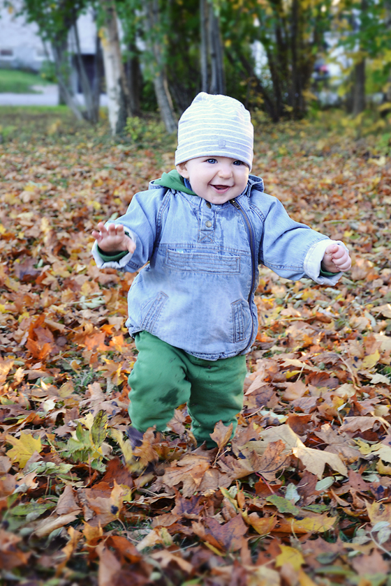 Glad ettåring springer bland höstlöven